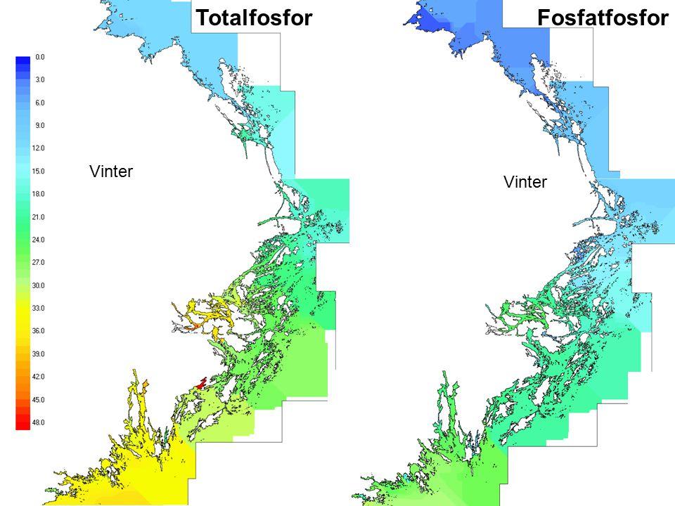 Totalfosfor Vinter Fosfatfosfor