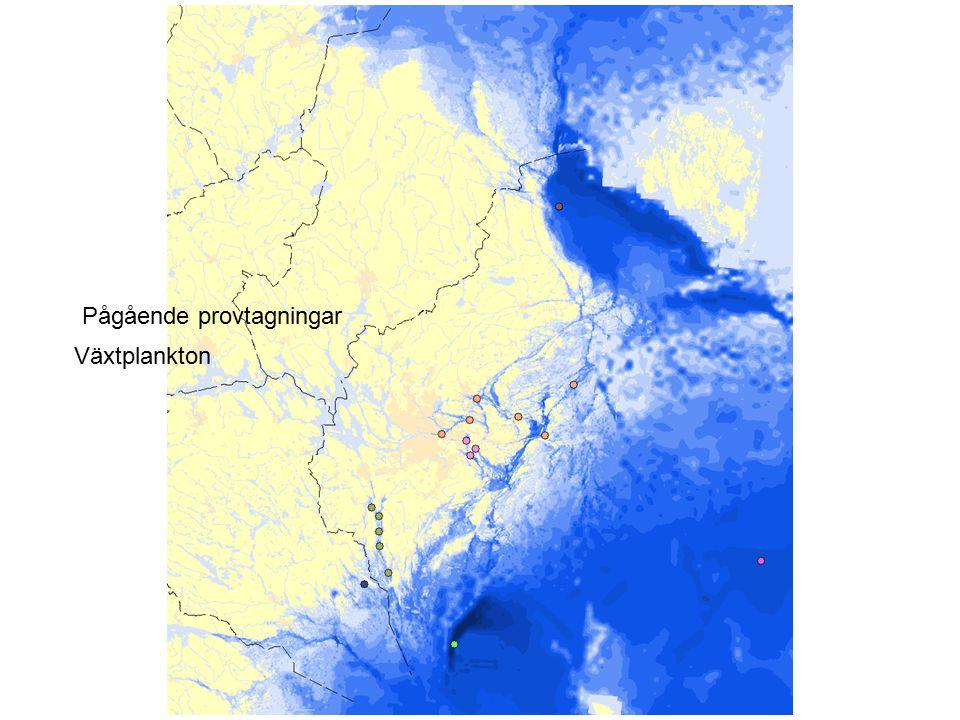 Växtplankton Kuststationer med användbara data för direktivet Pågående provtagningar