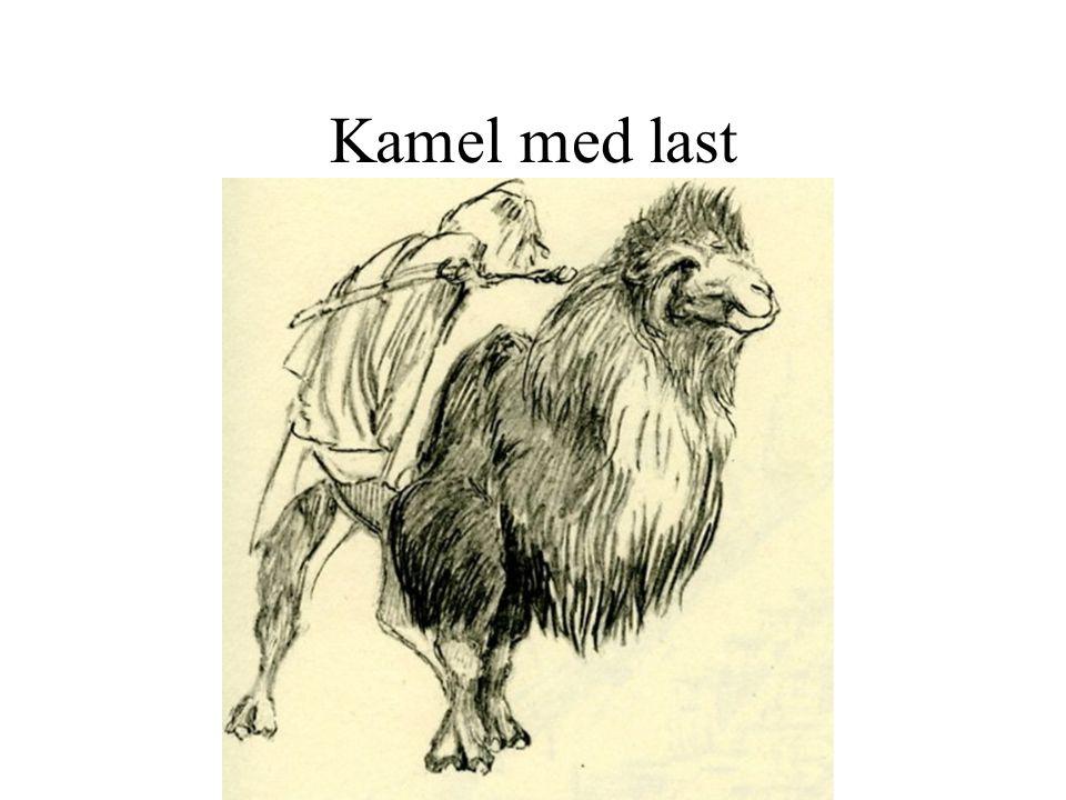 Kamel med last