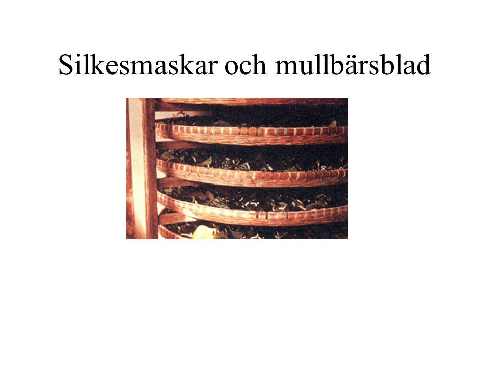 Förpuppade silkesmaskar