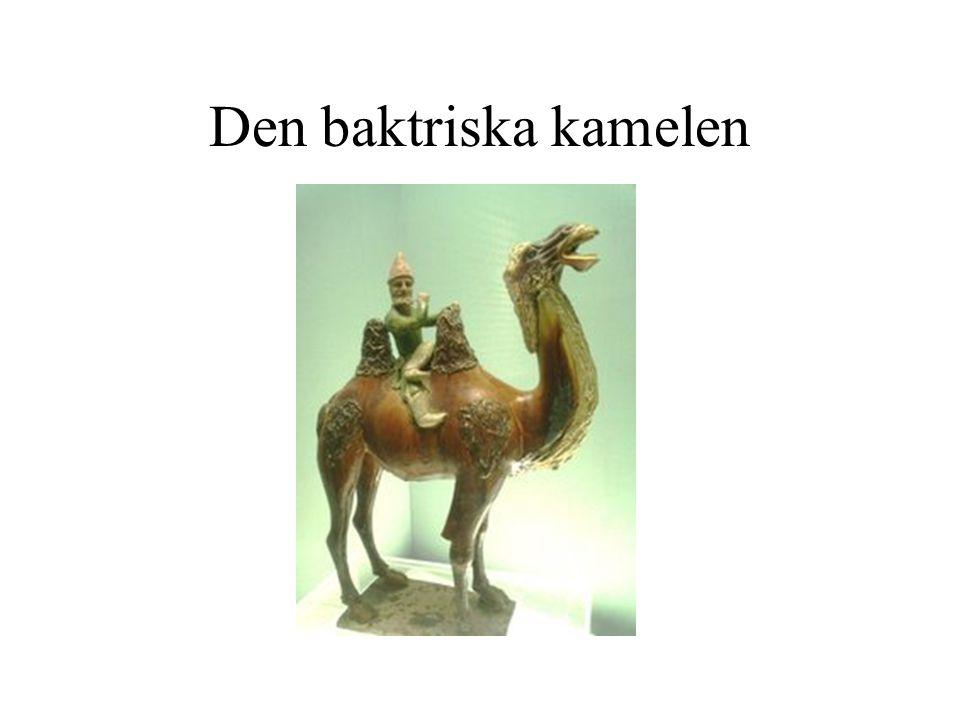 Den baktriska kamelen