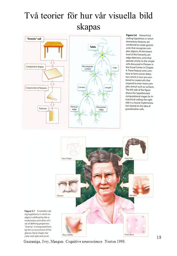 18 Två teorier för hur vår visuella bild skapas Gazzaniga, Ivry, Mangun. Cognitive neuroscience. Norton 1998.
