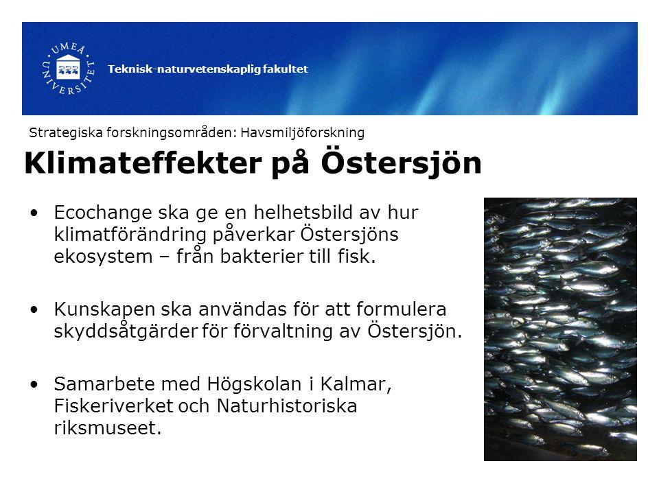 Teknisk-naturvetenskaplig fakultet Ecochange ska ge en helhetsbild av hur klimatförändring påverkar Östersjöns ekosystem – från bakterier till fisk. K