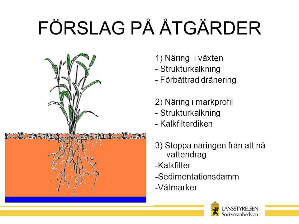 FÖRSLAG PÅ ÅTGÄRDER 1) Näring i växten - Strukturkalkning - Förbättrad dränering 2) Näring i markprofil - Strukturkalkning - Kalkfilterdiken 3) Stoppa näringen från att nå vattendrag -Kalkfilter -Sedimentationsdamm -Våtmarker
