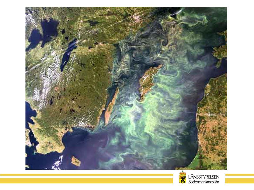 Nationella mål Baltic Sea Action Plan –Minska årlig kvävetillförsel med 21000 ton –Minska årlig fosfortillförsel med 290 ton