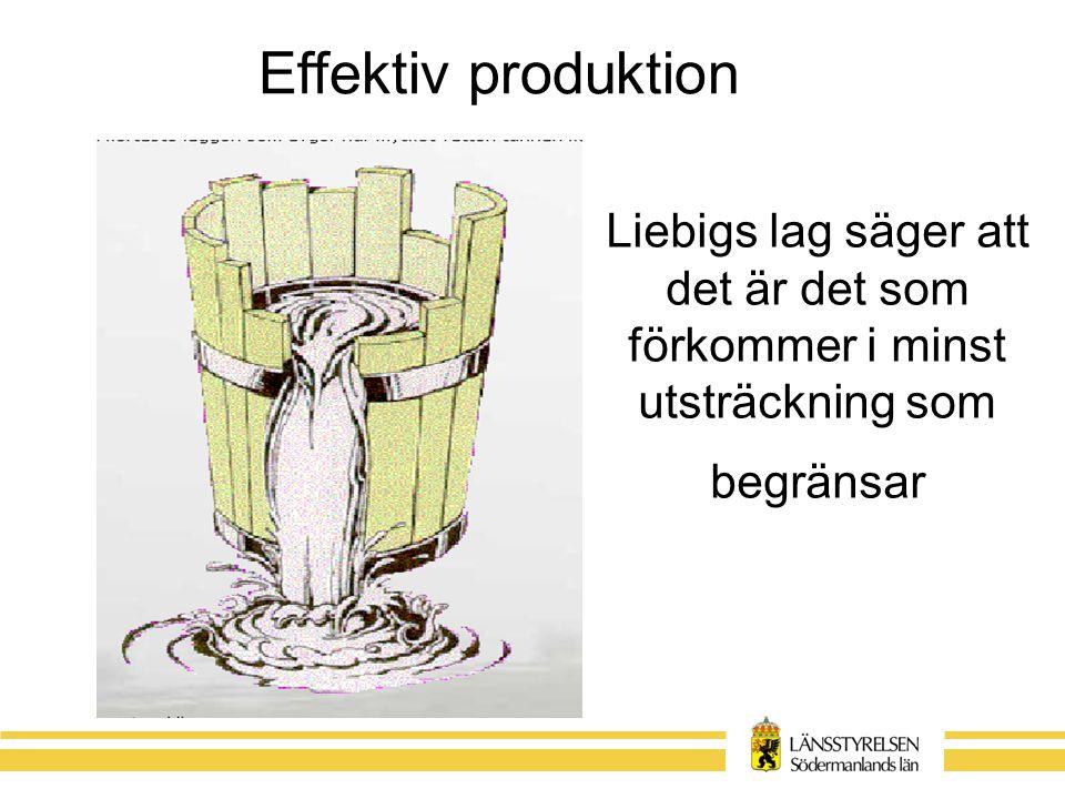 Liebigs lag säger att det är det som förkommer i minst utsträckning som begränsar Effektiv produktion