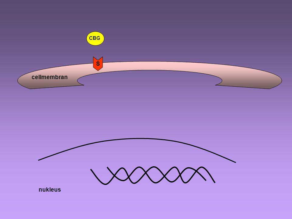 Förvärvad reaktion Antigen presenterande cell antigen ThP Th2 Th1 B-lymfocyt ab Sensitiserad T- lymfocyt Cytokiner (IL-2, IFN) IL-2 IL-4 IL-2 Glukokortikosteroider Makrofager Cytotoxiska T-celler