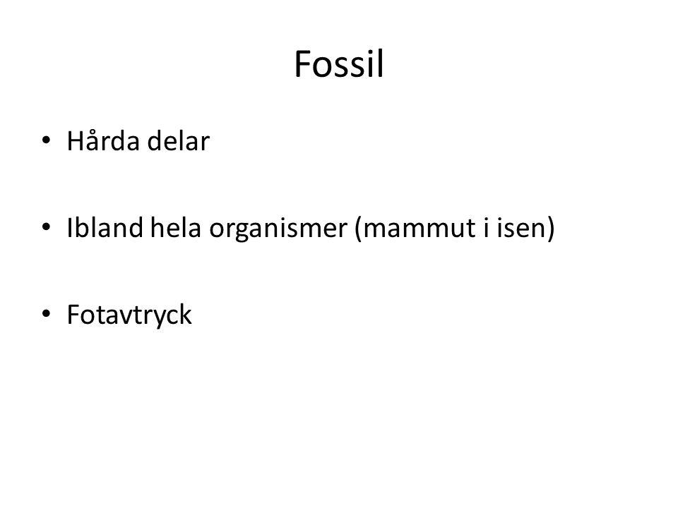 Fossil Hårda delar Ibland hela organismer (mammut i isen) Fotavtryck