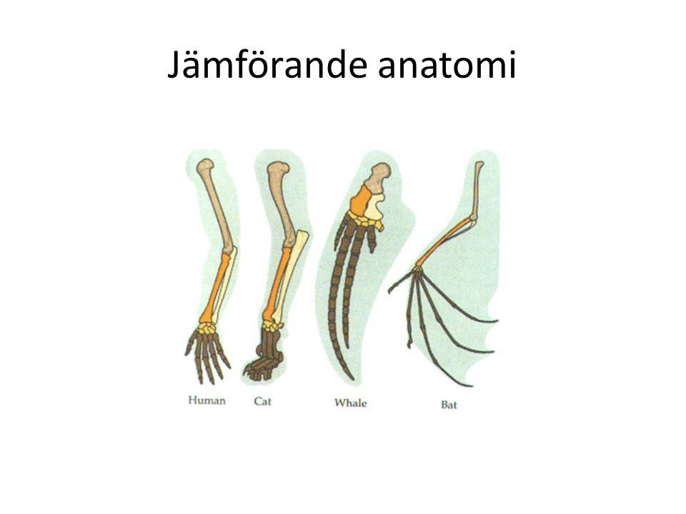 Jämförande anatomi