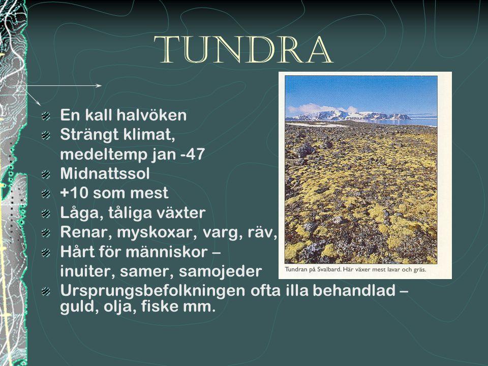 Tundra En kall halvöken Strängt klimat, medeltemp jan -47 Midnattssol +10 som mest Låga, tåliga växter Renar, myskoxar, varg, räv, sorkar Hårt för män