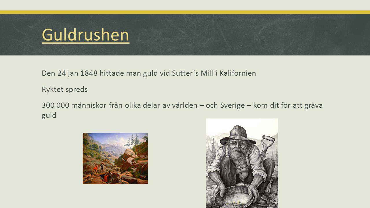 Guldrushen Den 24 jan 1848 hittade man guld vid Sutter´s Mill i Kalifornien Ryktet spreds 300 000 människor från olika delar av världen – och Sverige