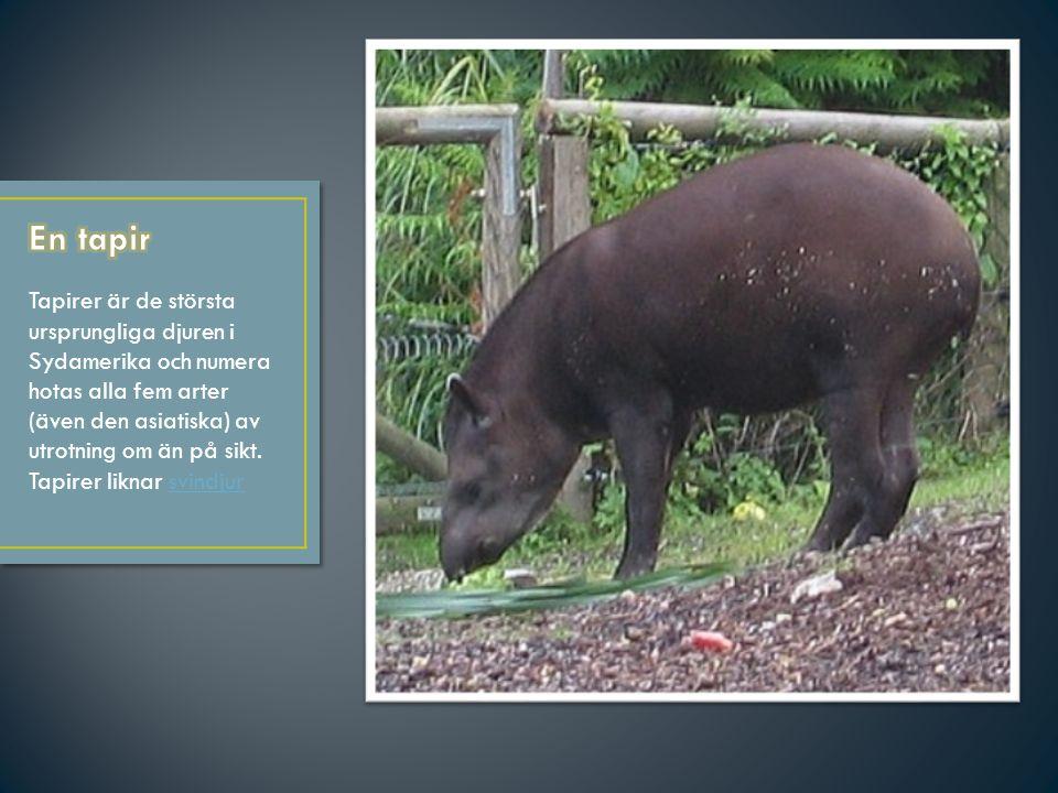 1.kamel 2.tapir 3.kanin 4.banan 5.melon 6.apelsin 7.baggen 8.tackan 9.lammen 10. äpplen 11. hallon 12. plommon