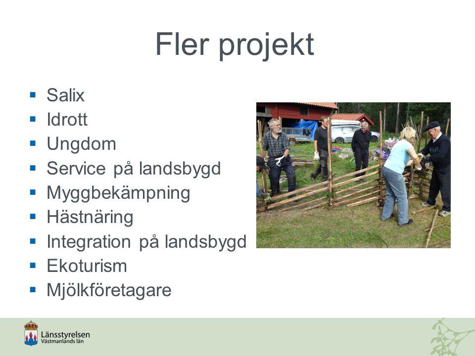 Fler projekt  Salix  Idrott  Ungdom  Service på landsbygd  Myggbekämpning  Hästnäring  Integration på landsbygd  Ekoturism  Mjölkföretagare