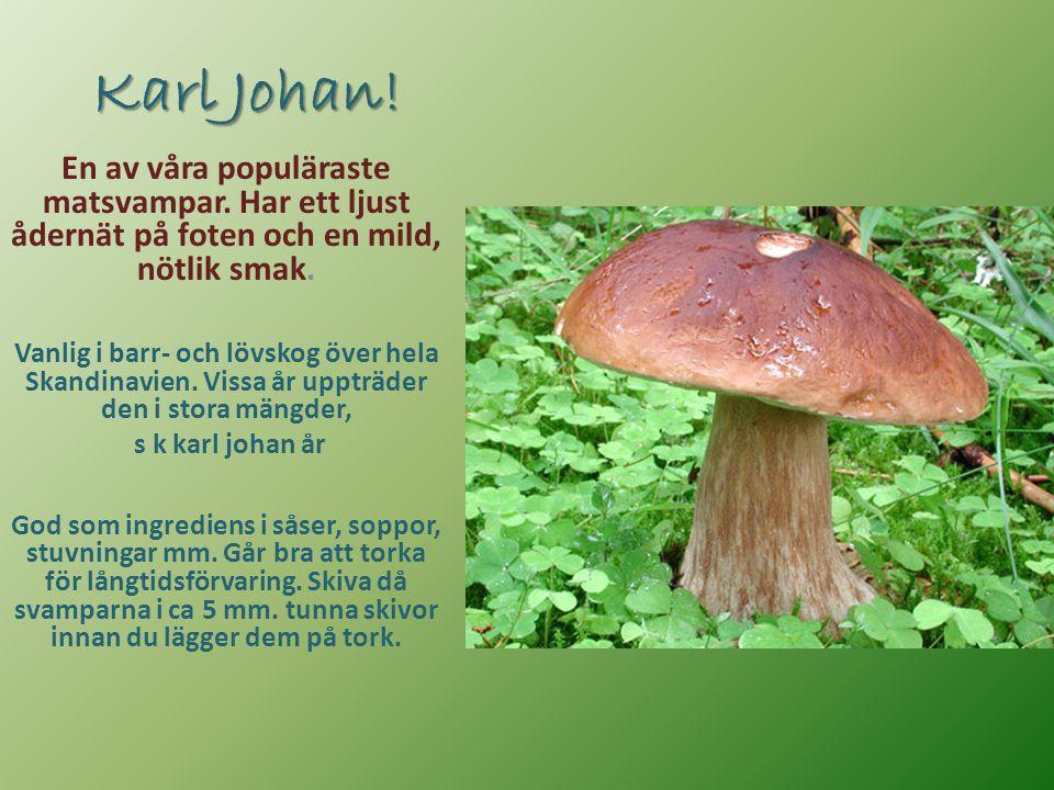 Karl Johan! En av våra populäraste matsvampar. Har ett ljust ådernät på foten och en mild, nötlik smak. Vanlig i barr- och lövskog över hela Skandinav