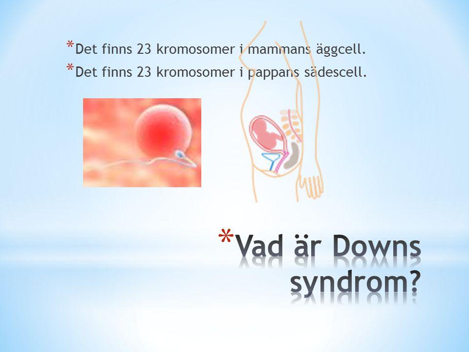 * Det finns 23 kromosomer i mammans äggcell. * Det finns 23 kromosomer i pappans sädescell.