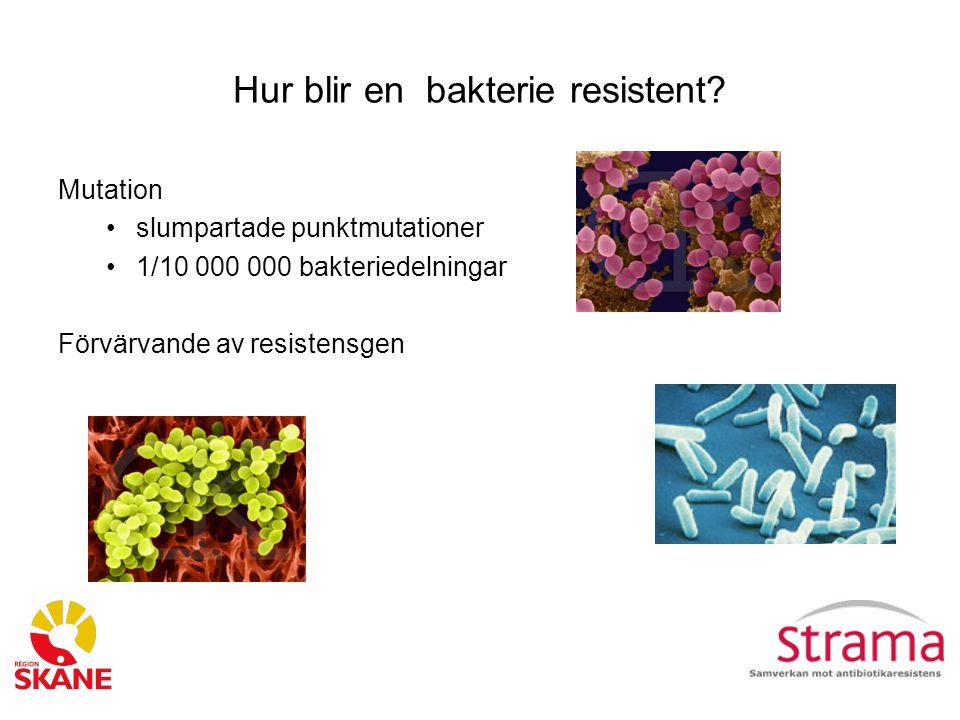 Hur blir en bakterie resistent.