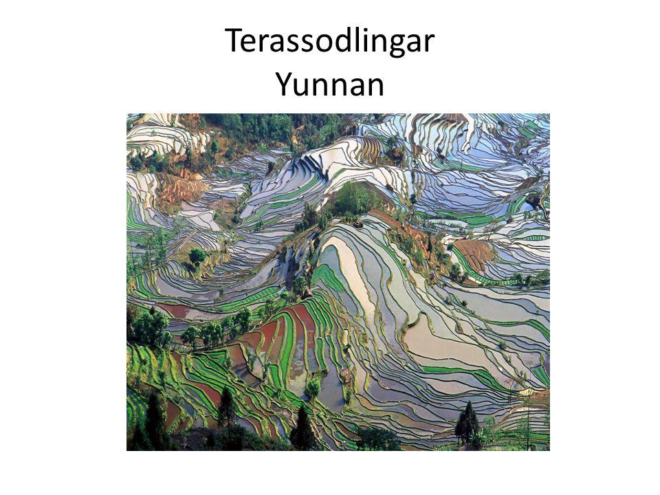 Terassodlingar Yunnan