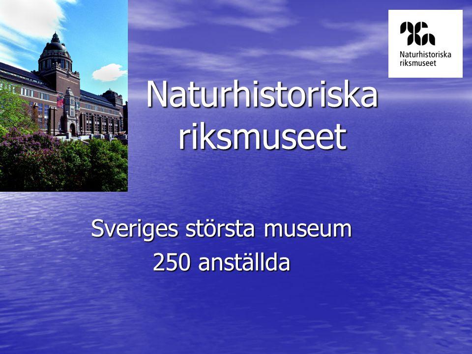 Naturhistoriska riksmuseet Sveriges största museum 250 anställda
