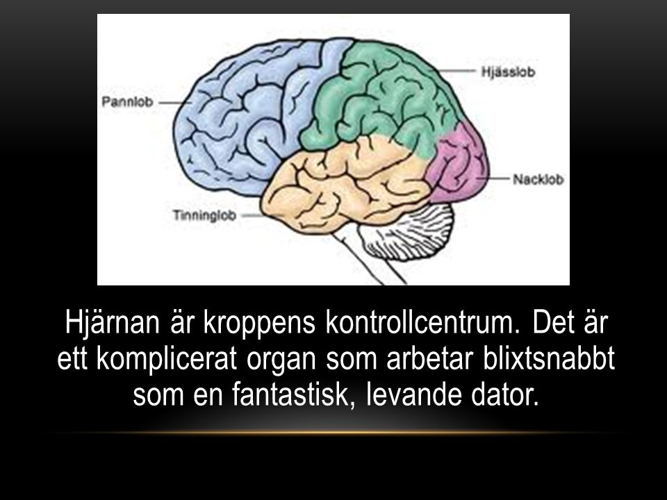 Hjärnan är kroppens kontrollcentrum. Det är ett komplicerat organ som arbetar blixtsnabbt som en fantastisk, levande dator.