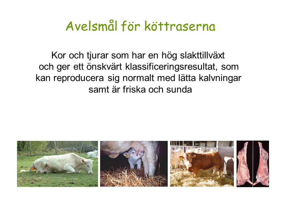Målegenskaper i svensk köttrasavel Kalvningsförmåga hos kalven (direkt komponent) Kalvningsförmåga hos kon (maternell komponent) Tillväxt till 200d, maternell komponent (mjölkmängd) Nettotillväxt från födelse till slakt Fettgrupp registrerad vid slakt EUROP-klass registrerad vid slakt