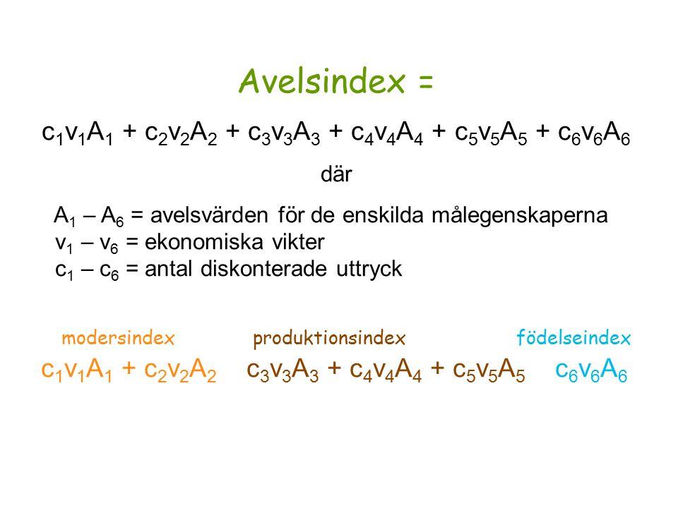 Avelsindex = c 1 v 1 A 1 + c 2 v 2 A 2 + c 3 v 3 A 3 + c 4 v 4 A 4 + c 5 v 5 A 5 + c 6 v 6 A 6 där A 1 – A 6 = avelsvärden för de enskilda målegenskaperna v 1 – v 6 = ekonomiska vikter c 1 – c 6 = antal diskonterade uttryck modersindex produktionsindex födelseindex c 1 v 1 A 1 + c 2 v 2 A 2 c 3 v 3 A 3 + c 4 v 4 A 4 + c 5 v 5 A 5 c 6 v 6 A 6