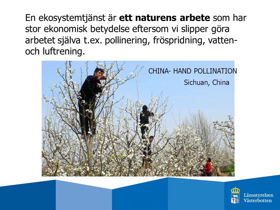 En ekosystemtjänst är ett naturens arbete som har stor ekonomisk betydelse eftersom vi slipper göra arbetet själva t.ex. pollinering, fröspridning, va