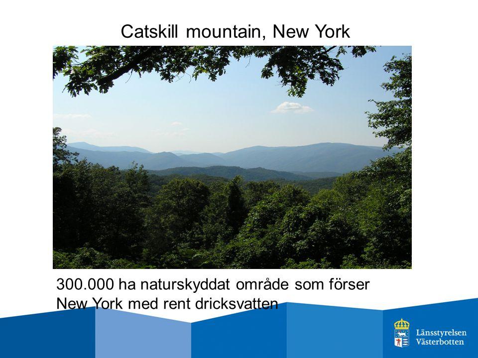Catskill mountain, New York 300.000 ha naturskyddat område som förser New York med rent dricksvatten