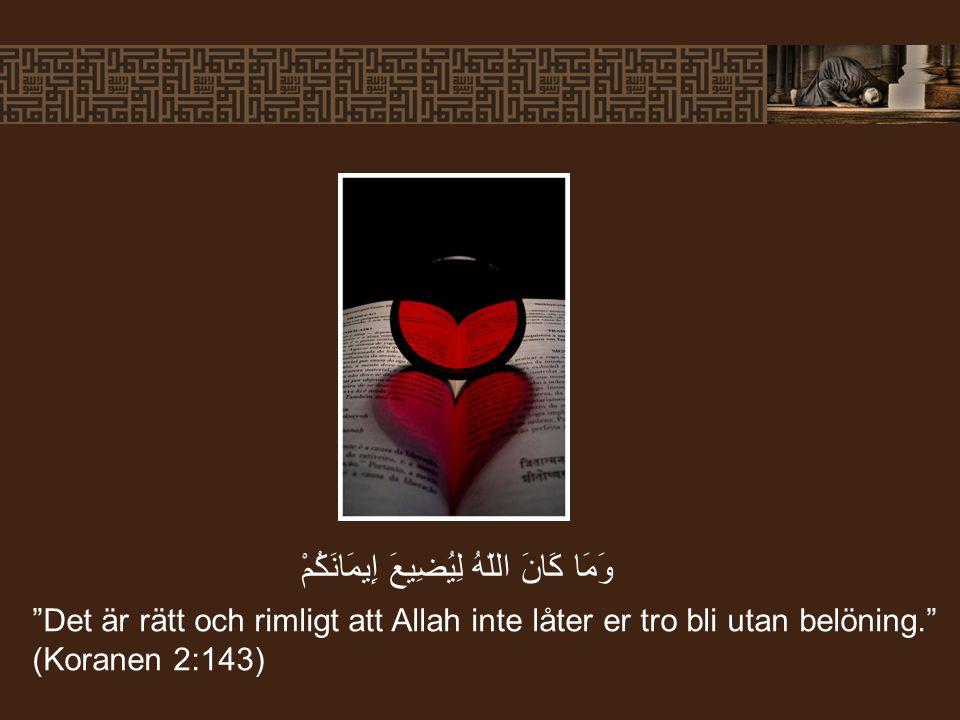 """""""Det är rätt och rimligt att Allah inte låter er tro bli utan belöning."""" (Koranen 2:143) وَمَا كَانَ اللّهُ لِيُضِيعَ إِيمَانَكُمْ"""