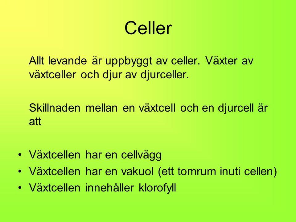 Celler Allt levande är uppbyggt av celler.Växter av växtceller och djur av djurceller.