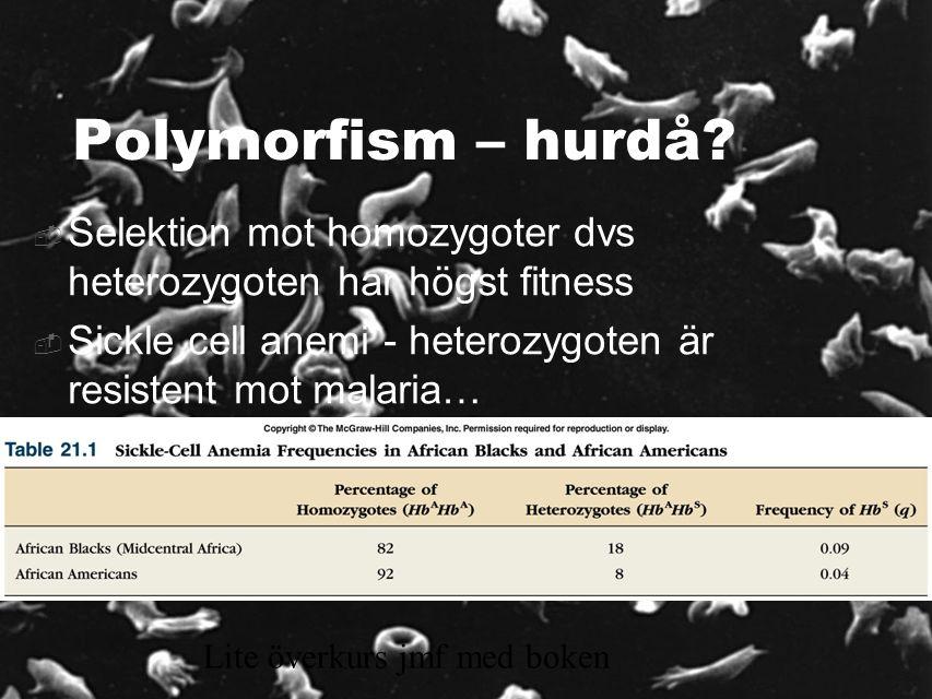12 Polymorfism – hurdå.