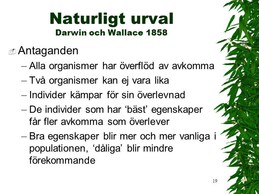 19 Naturligt urval Darwin och Wallace 1858  Antaganden –Alla organismer har överflöd av avkomma –Två organismer kan ej vara lika –Individer kämpar för sin överlevnad –De individer som har 'bäst' egenskaper får fler avkomma som överlever –Bra egenskaper blir mer och mer vanliga i populationen, 'dåliga' blir mindre förekommande