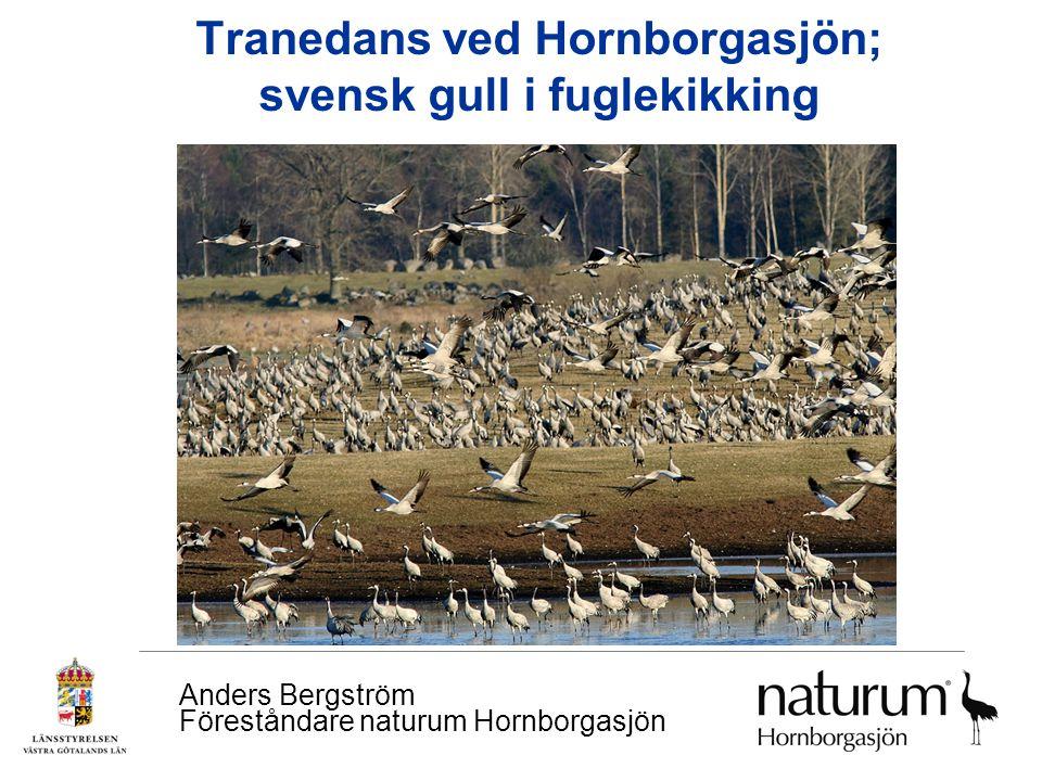 Tranedans ved Hornborgasjön; svensk gull i fuglekikking Anders Bergström Föreståndare naturum Hornborgasjön