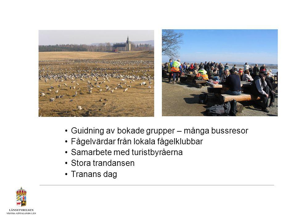Guidning av bokade grupper – många bussresor Fågelvärdar från lokala fågelklubbar Samarbete med turistbyråerna Stora trandansen Tranans dag