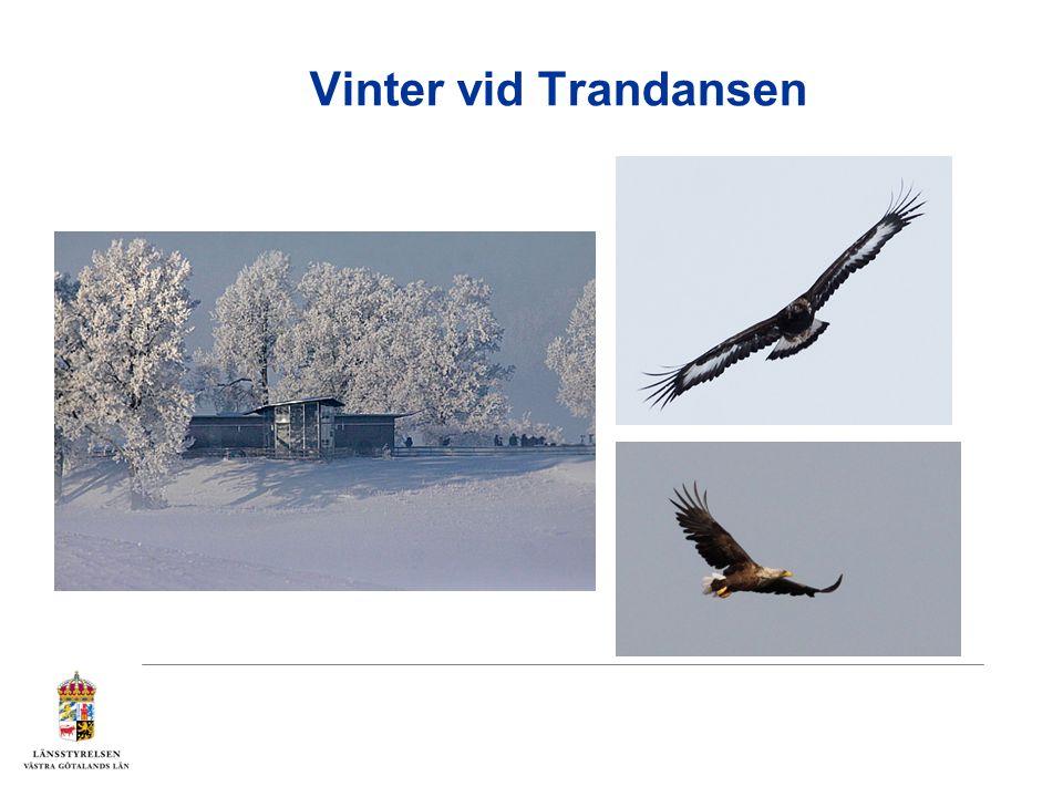 Vinter vid Trandansen