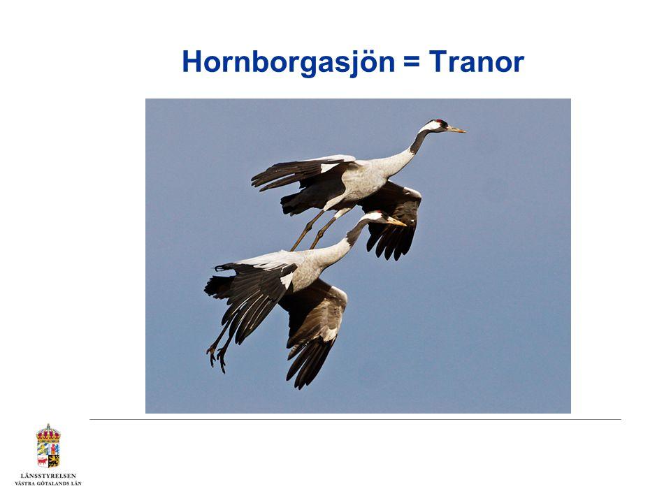 Hornborgasjön = Tranor