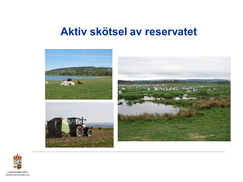 Aktiv skötsel av reservatet