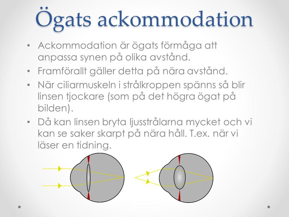 Ögats ackommodation Ackommodation är ögats förmåga att anpassa synen på olika avstånd. Framförallt gäller detta på nära avstånd. När ciliarmuskeln i s