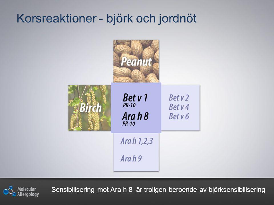 Korsreaktioner - björk och jordnöt Sensibilisering mot Ara h 8 är troligen beroende av björksensibilisering