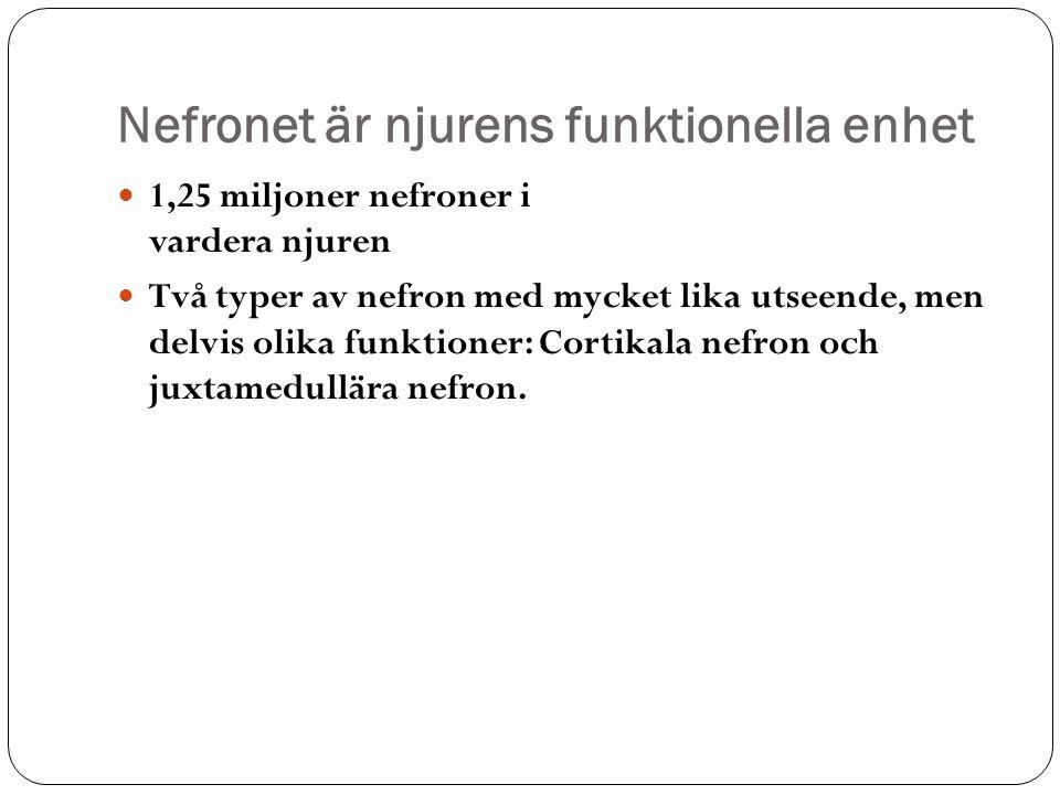 Nefronet är njurens funktionella enhet 1,25 miljoner nefroner i vardera njuren Två typer av nefron med mycket lika utseende, men delvis olika funktion