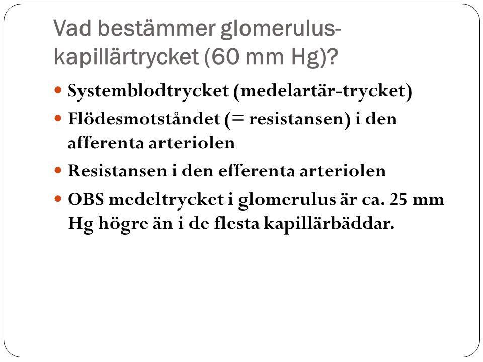 Vad bestämmer glomerulus- kapillärtrycket (60 mm Hg)? Systemblodtrycket (medelartär-trycket) Flödesmotståndet (= resistansen) i den afferenta arteriol