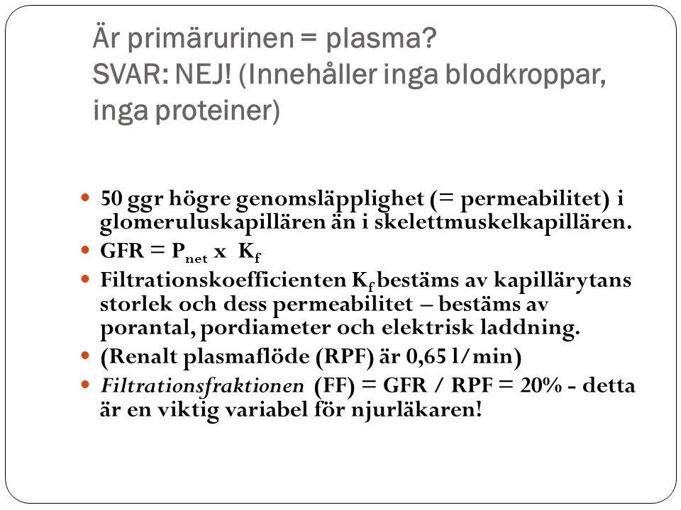 Är primärurinen = plasma? SVAR: NEJ! (Innehåller inga blodkroppar, inga proteiner) 50 ggr högre genomsläpplighet (= permeabilitet) i glomeruluskapillä
