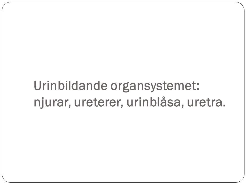 Reglering av den finala urinvolymen – 3 processer 1.