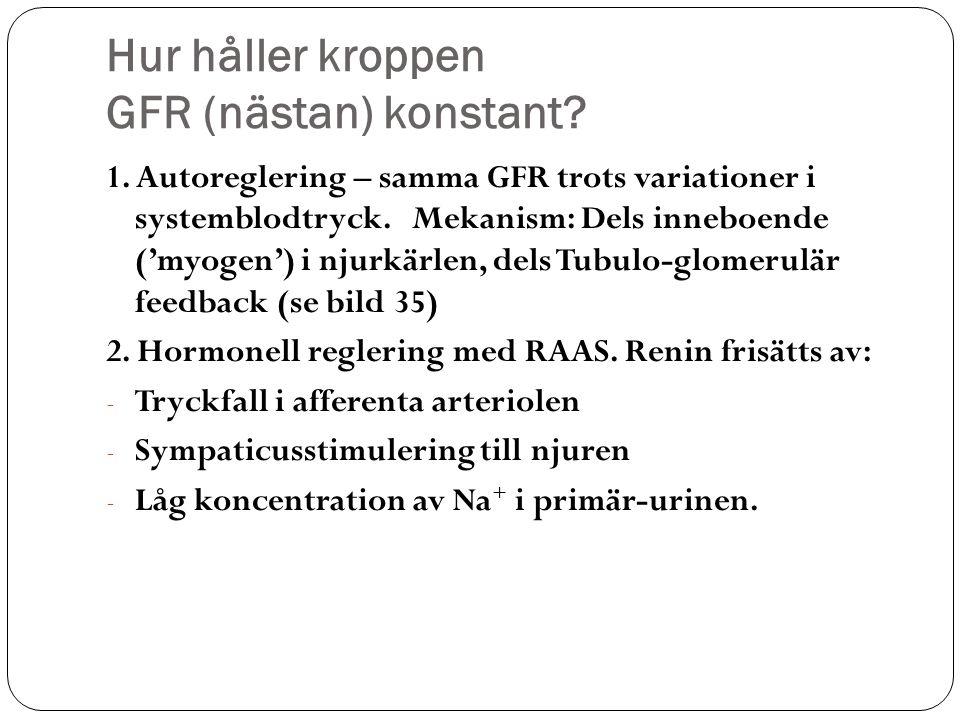 Hur håller kroppen GFR (nästan) konstant? 1. Autoreglering – samma GFR trots variationer i systemblodtryck. Mekanism: Dels inneboende ('myogen') i nju