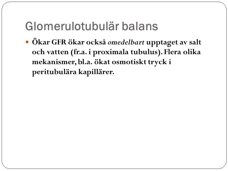 Glomerulotubulär balans Ökar GFR ökar också omedelbart upptaget av salt och vatten (fr.a. i proximala tubulus). Flera olika mekanismer, bl.a. ökat osm