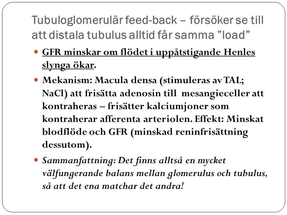 """Tubuloglomerulär feed-back – försöker se till att distala tubulus alltid får samma """"load"""" GFR minskar om flödet i uppåtstigande Henles slynga ökar. Me"""