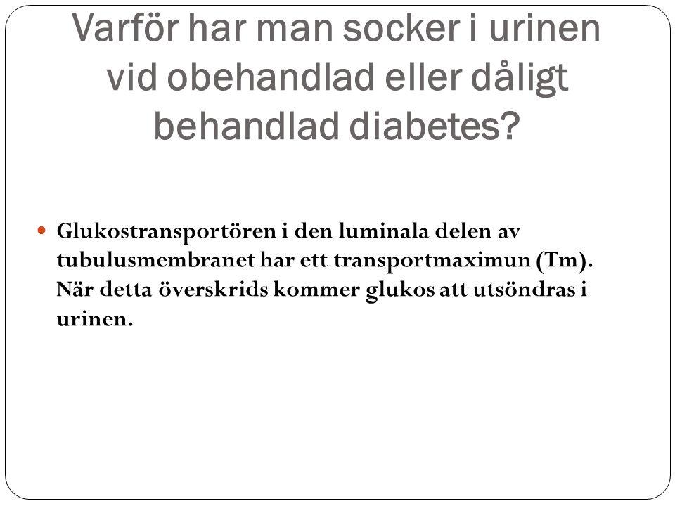 Varför har man socker i urinen vid obehandlad eller dåligt behandlad diabetes? Glukostransportören i den luminala delen av tubulusmembranet har ett tr
