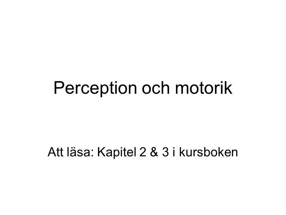 Perception och motorik Att läsa: Kapitel 2 & 3 i kursboken