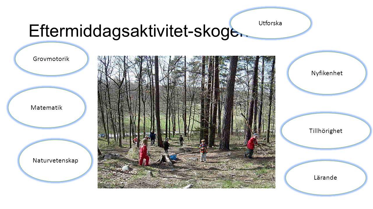 Eftermiddagsaktivitet-skogen Utforska Nyfikenhet Matematik Naturvetenskap Lärande Grovmotorik Tillhörighet