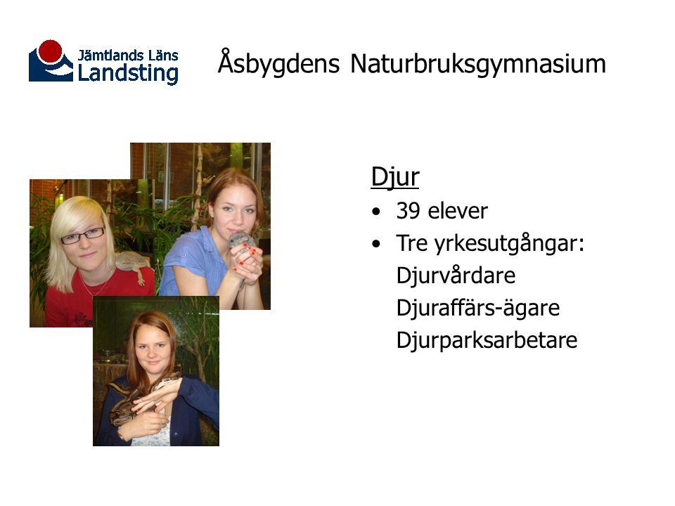 Åsbygdens Naturbruksgymnasium Djur 39 elever Tre yrkesutgångar: Djurvårdare Djuraffärs-ägare Djurparksarbetare