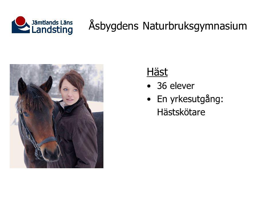 Åsbygdens Naturbruksgymnasium Häst 36 elever En yrkesutgång: Hästskötare